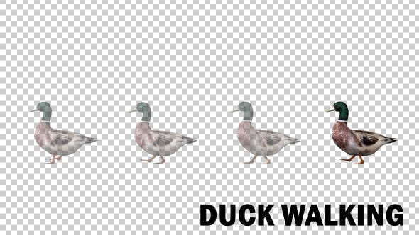 Thumbnail for Duck Walk