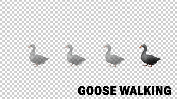 Thumbnail for Farm Animals - Goose Walk