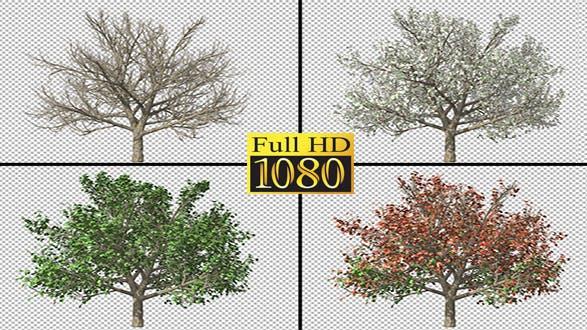 A Tree Passing Through The Four Seasons