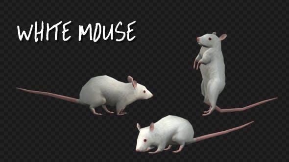 Thumbnail for Animal Pack -White Mouse - 3 Scene