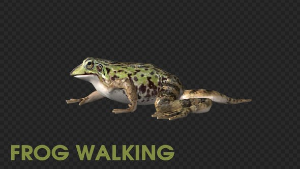 Thumbnail for Frog Walking