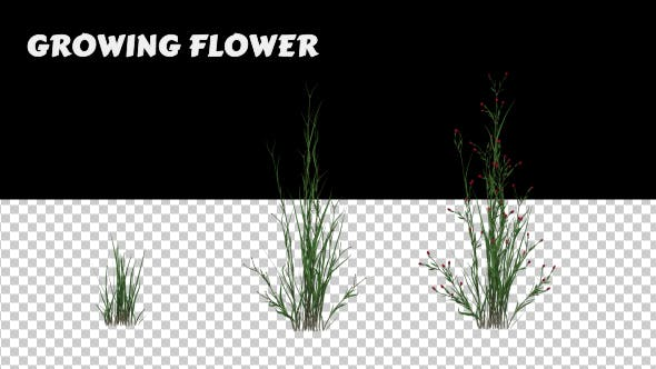 Thumbnail for Growing Flower