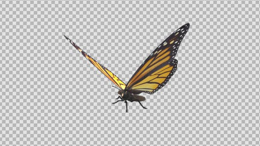 Thumbnail for Flying Butterfly - North American Monarch
