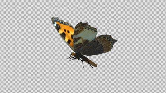 Flying Butterfly - Eurasian Tortoise Shell