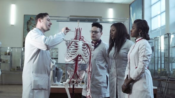 Group of Medical Students at an Anatomy Lecture