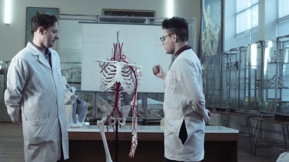 Student And Teacher In Medical Anatomy Class By Framestock On Envato