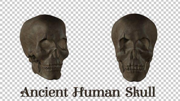 Thumbnail for Ancient  Human  Skull