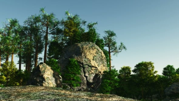 Thumbnail for Pine Forest on Granite Rock