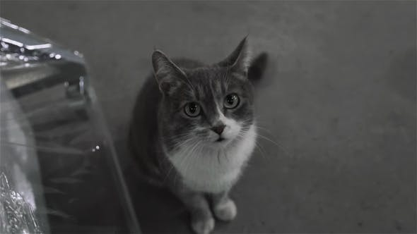 Thumbnail for Dirty Street Cat Sitting in Factory