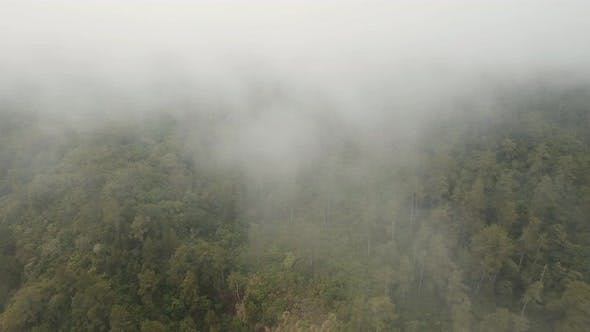 Thumbnail for Rainforest in the Fog and Clouds. Bali, Indonesia.