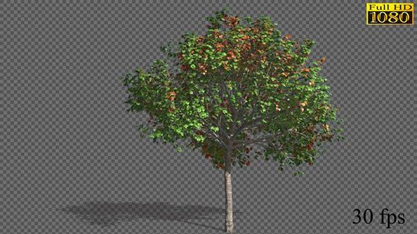 Growing Seasons Tree