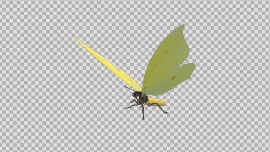 Thumbnail for Flying Butterfly - Eurasian Brimstone