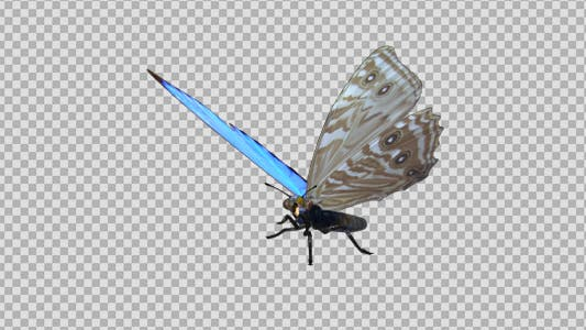 Thumbnail for Flying Butterfly - Tropical Morpho