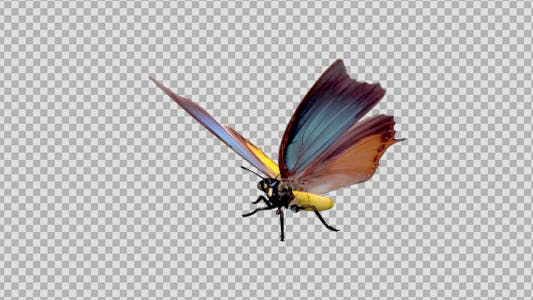 Thumbnail for Flying Butterfly - Fantasy Charaxes