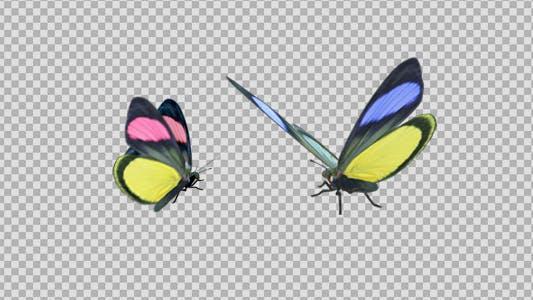 Thumbnail for Butterfly Pair - Rainbow Batesia