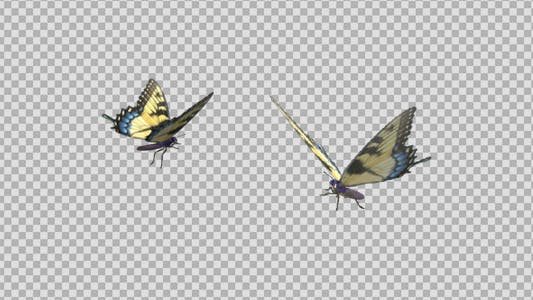 Thumbnail for Butterfly Pair - Tiger Swallowtail