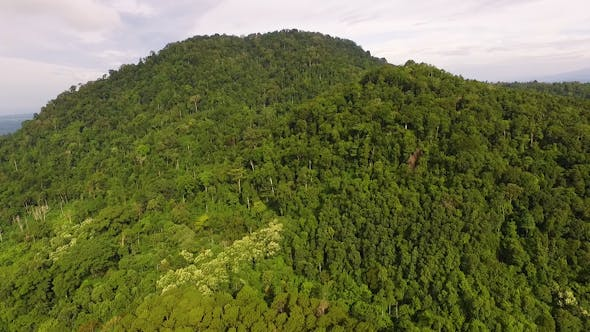 Thumbnail for Seulawah Inong Mountain in Aceh Forest