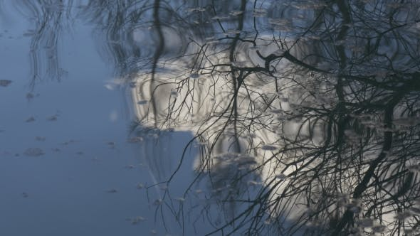 Thumbnail for Reflection of Trees in Water