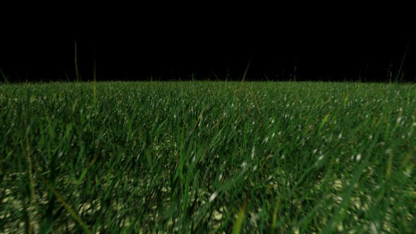 Thumbnail for Grass Field