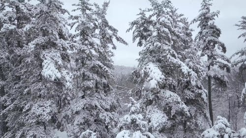 Aerial Flying Through Gap in Snowy Trees