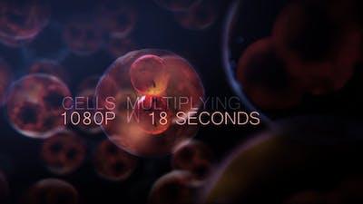 Cell DNA Hyper Division