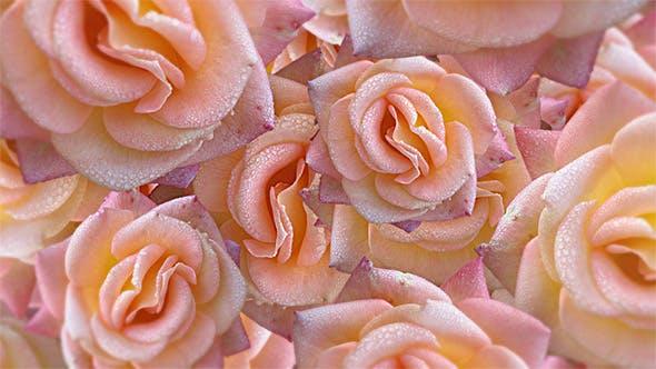 Yellowish Pink Roses Floating Background 4K