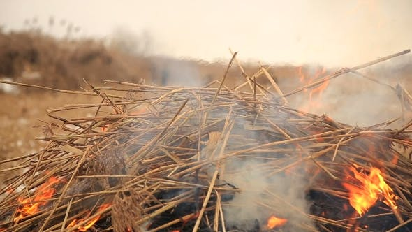 Thumbnail for Stack of Dry Grass on Fire