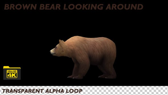 Thumbnail for 4K Brown Bear Looking Around