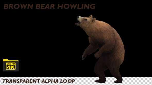 Thumbnail for 4K Brown Bear Howling