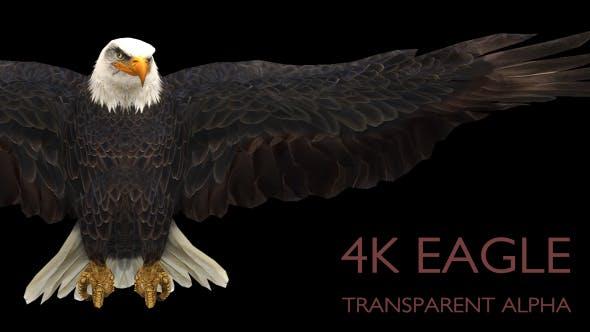 Thumbnail for Eagle Gliding