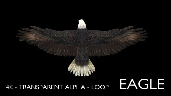 Thumbnail for 4K Eagle Gliding Loop Animation