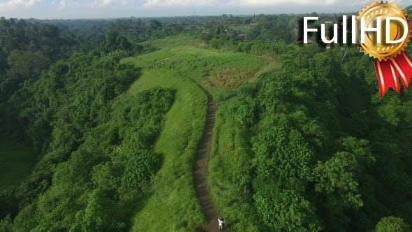 Thumbnail for Aerial View Campuhan Ridge Walk, Ubud, Bali