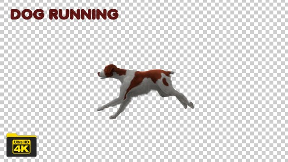 Thumbnail for Dog Running