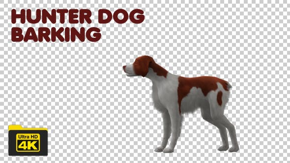 Thumbnail for Hunter Dog Barking