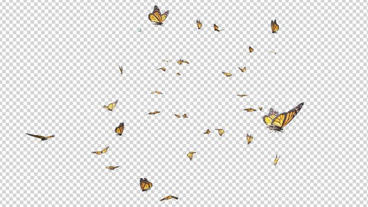 Butterfly Swarm - American Monarch