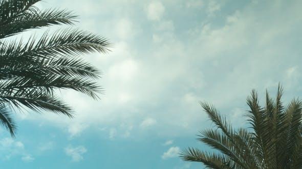 Thumbnail for Palm Tree Sky Cloud