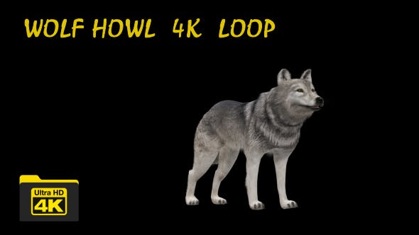 Thumbnail for 4K Realistic 3D Wolf Howling Animation