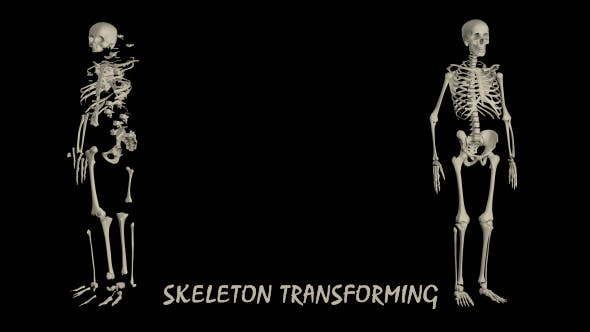 Thumbnail for Human Skeleton Transforming - 2