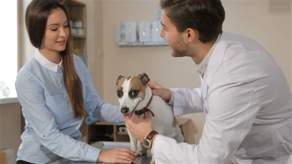 Thumbnail for Male Veterinarian Queries Woman About Her Pet