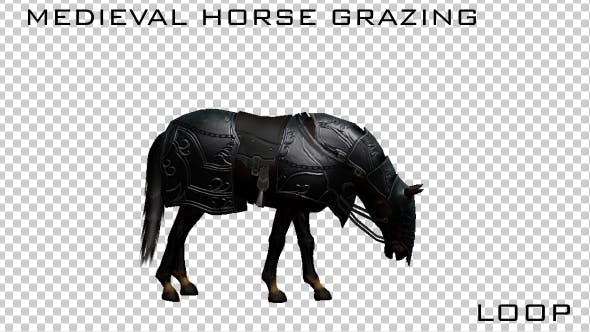 Thumbnail for Medieval War Horse Eating - Grazing