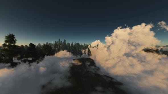 Thumbnail for Morning Forest in Fog