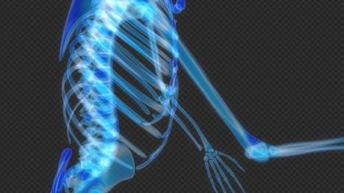 Skeleton Dancing Hologram Hud Loop