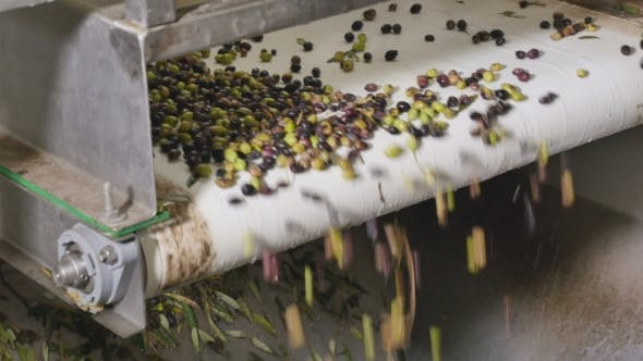 Thumbnail for The Olive Oil Production Om Modern Factory
