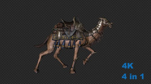 A Camel With A Saddle Run Pack