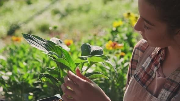 Gärtnerin untersucht Pflanzenblätter im Topf