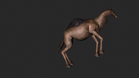 Thumbnail for A Camel Walk Run Stop And Forefoot Lift Leg And Screaming Pack 6 In 1