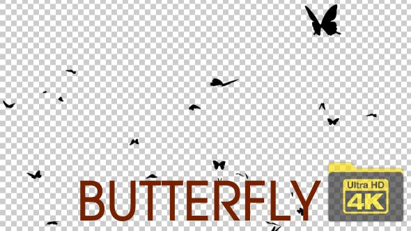 Thumbnail for 4K Butterfly Silhouettes