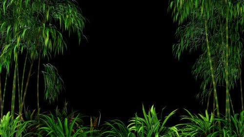 Bamboo Forest Overlay