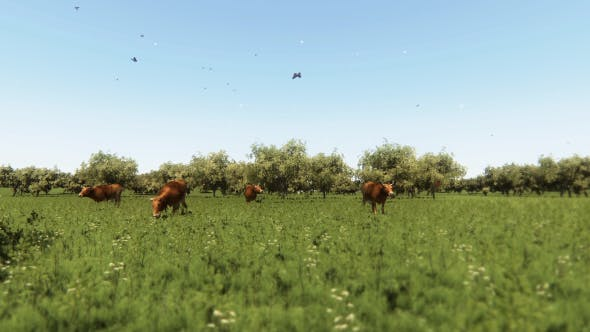 Thumbnail for Herd Of Cows