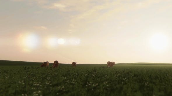 Cover Image for Cows On Pasture At Sunrise